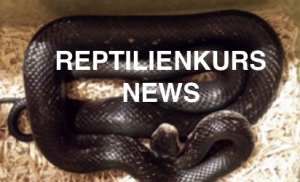 Reptilienkurs News Button