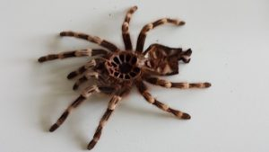 Spinnenhäutung_klein