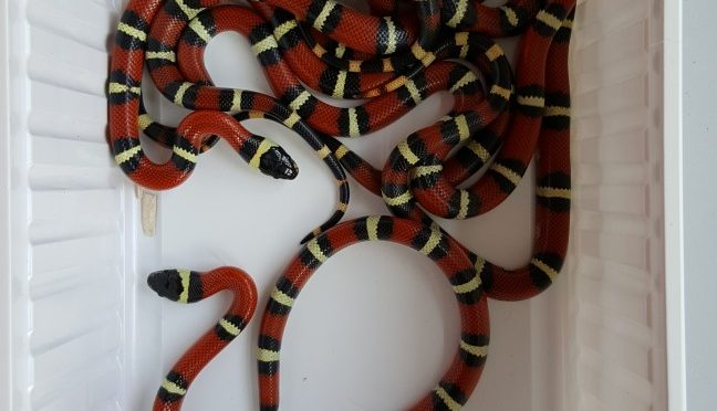 Hurra, die Schlangen sind geschlüpft!