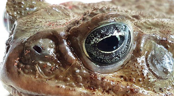 Können diese Augen lügen?